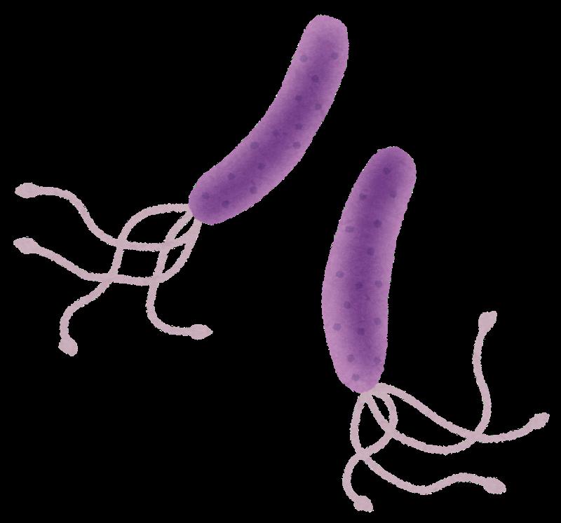 なぜピロリ菌検査が必要なの?胃がんとの関係性を簡単解説